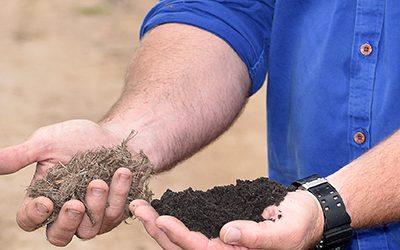 Evolution compost